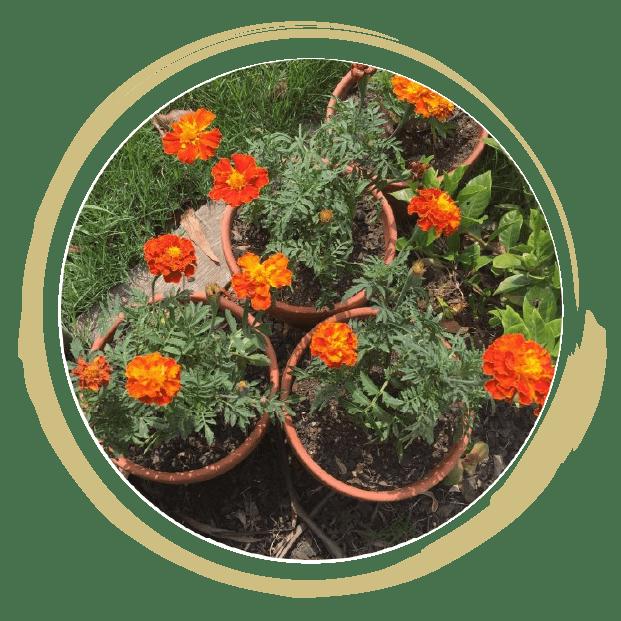 Garden plant seeds in Victoria