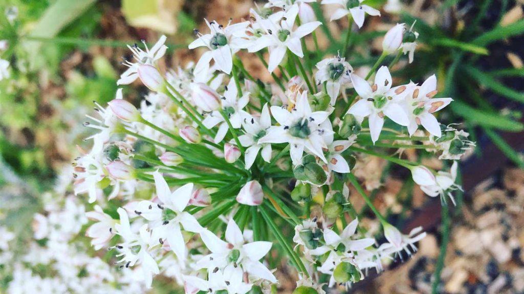 Seeds and plants Australia